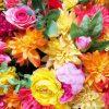 清水公園の花ファンタジアをお得に利用する5つの割引クーポン情報!