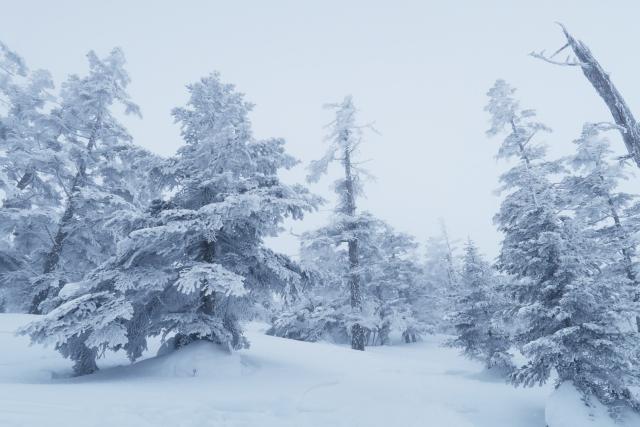 ニセコアンヌプリ国際スキー場のリフト券の4つの割引クーポン情報!